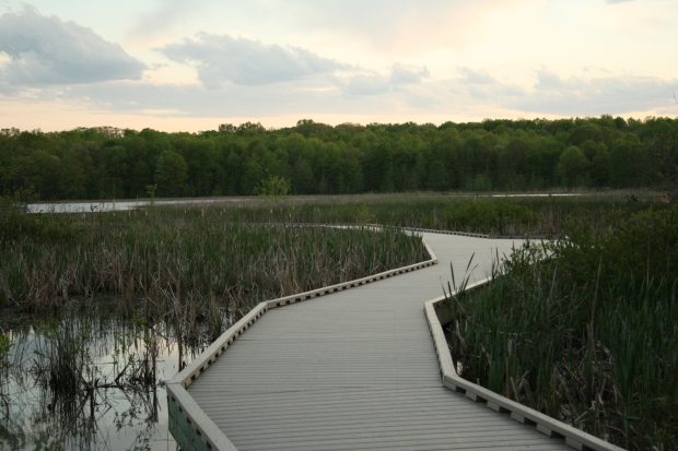 The boardwalk through the central wetland at sunset.