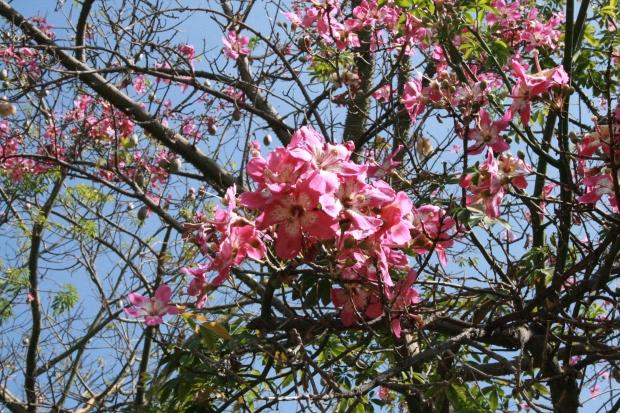 Bright hibiscus.