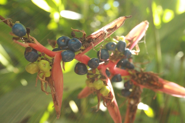 Romantic shot of mystery berries.